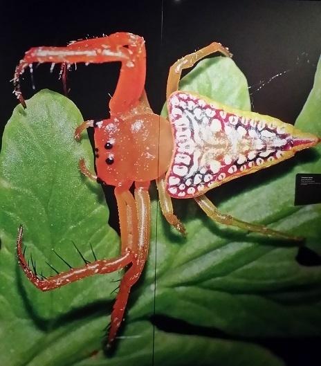 beautiful-spider